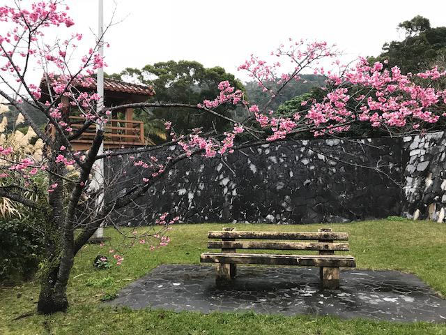 IMG_5209椅子と桜