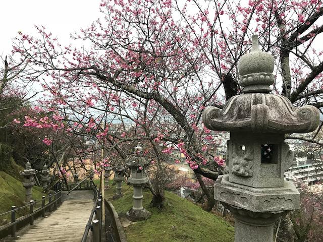 IMG_5219燈篭と桜